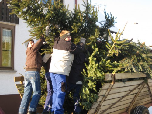 2009 Weihnachtsbäume 03