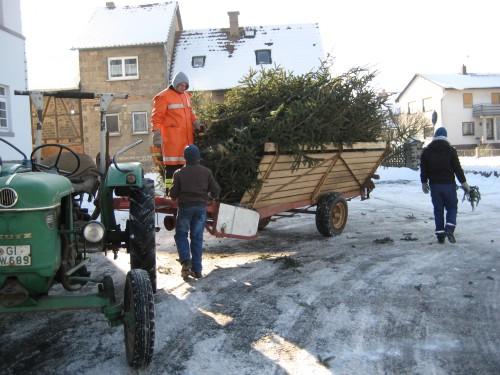2009 Weihnachtsbäume 04