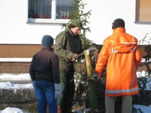 2009 Weihnachtsbäume 05