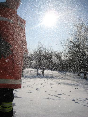 2009 Weihnachtsbäume 08