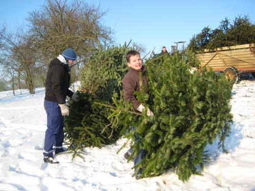 2009 Weihnachtsbäume 09