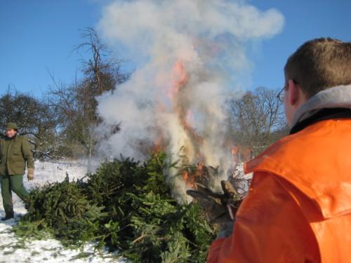 2009 Weihnachtsbäume 13