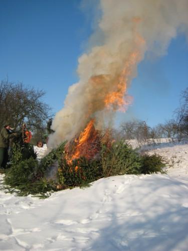 2009 Weihnachtsbäume 20