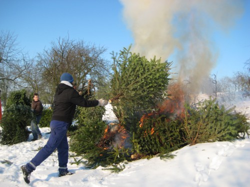 2009 Weihnachtsbäume 21
