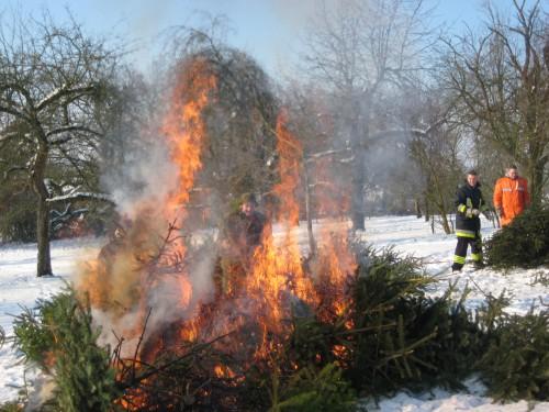 2009 Weihnachtsbäume 23