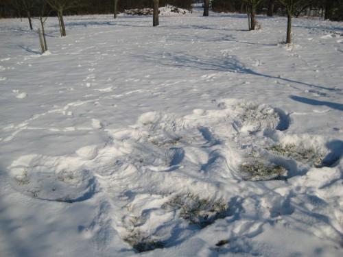 2009 Weihnachtsbäume 25