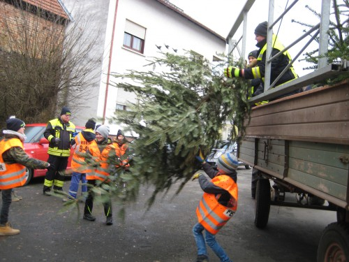2018 Weihnachtsbäume 05