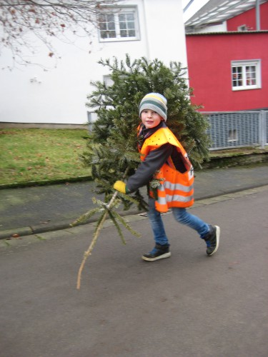 2018 Weihnachtsbäume 20