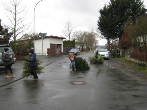 2019 Weihnachtsbäume02