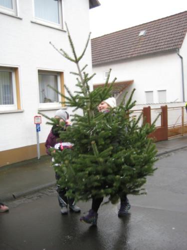 2019 Weihnachtsbäume09