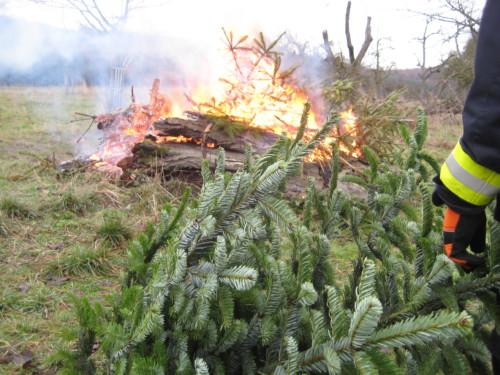 2019 Weihnachtsbäume23